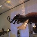 26-09The Oz Gulper Eels-2
