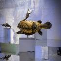 26-05The Wealthy Oz Anglerfish